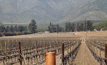 Global Backroads:  Chilean Wine Experience Vol 3